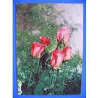 Фото, Цветы (3), Минсвязи РБ, 1995, чистая.
