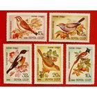 СССР. Певчие птицы. ( 5 марок ) 1981 года.
