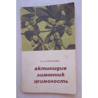 Актинидия, лимонник, жимолость