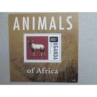 Животные Африки.