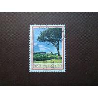 Италия 1966 г.Сосны на Палатинском холме.