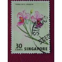 Сингапур. Цветы.