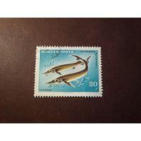Венгрия 1967 г.14-й Конгресс Международной федерации рыболовов.Стерлядь.
