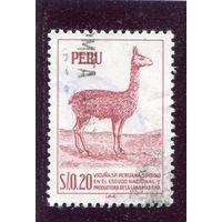 Перу. Лама викунья
