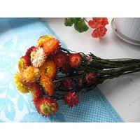 Сухоцветы кермек мята мелисса бессмертник для творчества