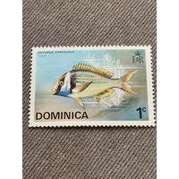 Доминика. Рыбы. Ocyurus Chrysurus