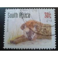 ЮАР 1998 гиена