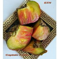 Семена томата Капитан Лаки (Счастливый капитан, Captain Lucky)