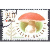 Болгария  гриб
