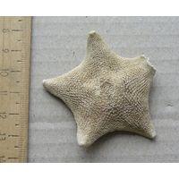 Морская звезда 2