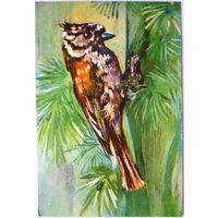 Календарик Птицы 1983 год
