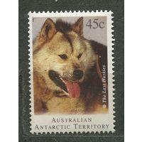 Собака хаски. Австралийские Антарктические территории. 1994. Чистая