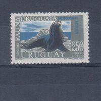 [1710] Уругвай 1970. Фауна.Морской лев. Одиночный выпуск. MNH