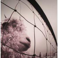 Pearl Jam -  VS  //  LP new