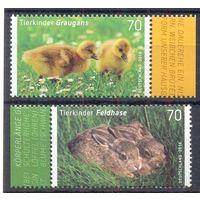 Германия фауна птенцы кролики