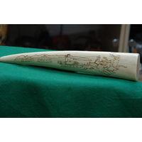 Клык моржа с рисунком     34 см     ( вес 740 гр . )