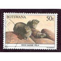 Ботсвана. Капский дамон