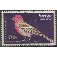 Израиль. Авиапочта. Птица-чечевица. 1963г. Mi#270.