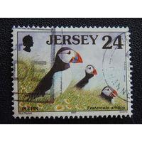 Джерси 1997г. Птицы.