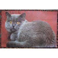 """Плакат (постер) """"Удивлённый кот"""" (СССР)"""