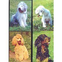 Фауна собаки цена за 4 открытки