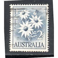 Австралия.Ми-299. Flannel Flower. Серия: Животные и цветы. 1959.