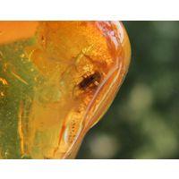 Природный камень янтарь с инклюзом