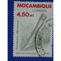 Мозамбик. Флора