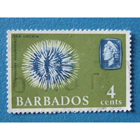 Барбадос 1965г. Королева Елизавета II. Морской ёж.