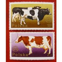 Польша. Коровы. ( 2 марки ).