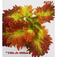 Колеус Tilt-A-Whirl