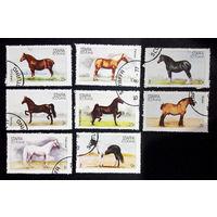 Шотландия. Стаффа 1977 г. Лошади. Фауна, полная серия из 8 марок #0267-Ф1P59