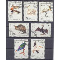 Афганистан птицы