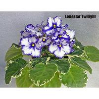 Фиалка Lonestar Twilight (св.лист)
