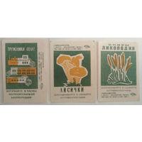 Спичечные этикетки ф.Гигант. Потребительская кооперация. 3-й выпуск.1968 год