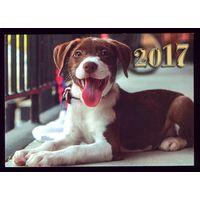 1 календарик 2017 год Собачка