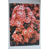 Цветы; 1975, подписана (ГДР).