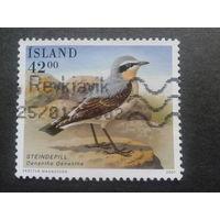 Исландия 2001 птица