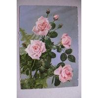 Цветы, 1964, подписана (ГДР).