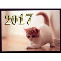 1 календарик 2017 год Котёнок