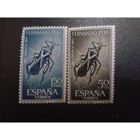 Фернандо-По 1965 Колония Испании жуки