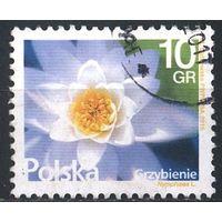 2015 - Польша - Стандарт - Кувшинка Mi.4788