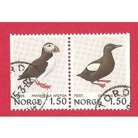 Фауна. Птицы. 2 марки в сцепке Норвегии