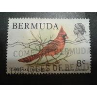 Бермуды, колония Англии 1978 птица Mi-2,4 евро гаш.