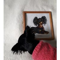 Чихуахуа картина в рамке вышивка крестиком