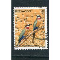 Ботсвана. Птицы. Белолобая щурка