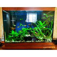 Аквариум (б\у два года) 50 литров, размер  50х25х40 Подставка с ножками, Чёрно белый грунт (высота 5 см.), подложка тетра для растений, крышка стеклянная + свет 20w.