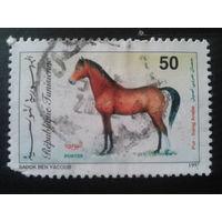 Тунис 1997 лошадь