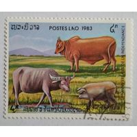 Лаос 1983. Дом.животные