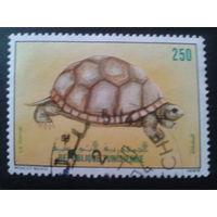 Тунис 1989 черепаха
